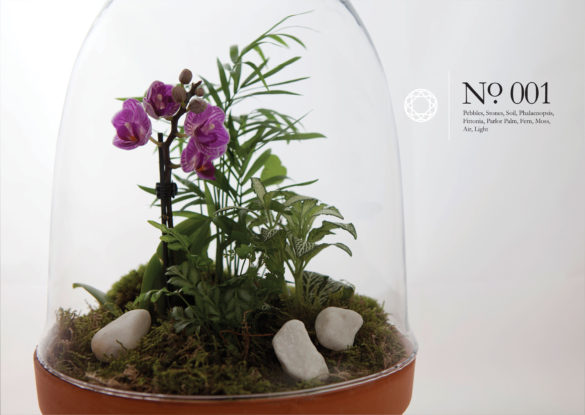 House of Sylphina interior design – terrarium design project. 001
