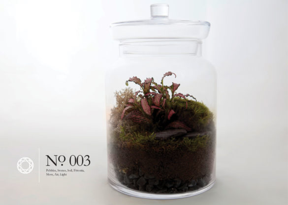 House of Sylphina interior design – terrarium design project. 003